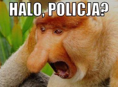 Halo policja